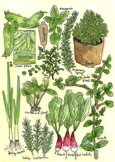 JUNE Herb & Succulent Watercolour Class