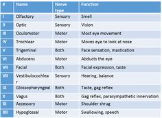 We all remember at one time we had some memory aid to assist with the cranial nerves, some were clean and some were not. Here is a quick review. To remember the nerves, I used the mnemonic - On Ol...