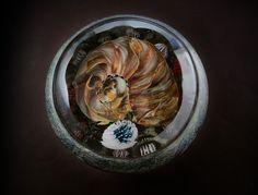 ammonite pool2