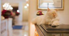 chats hôtel Bristol Paris