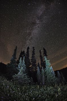 Milky Way above meadows and alpine pine of Mount Rainier National Park : Justin Prenton