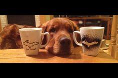 Yoop( upper peninsula, northern michigan, UP) mugs and a very nosey golden retriever