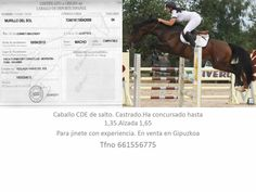 CABALLO CDE - SALTO
