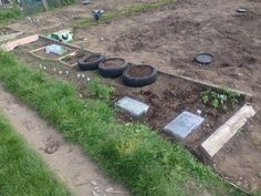 In the soil filled tires are peppers,swede. Cauliflower. Under the propagators are cabbages, two Nearly fully grown tomatoe pants and six baby tomato plants, and three blueberry plants and under the fleece further up a variety of veg and fruit. And eight strawberry plants