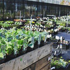 De keuze is reuze, met meer dan 250 soorten vaste planten op voorraad #vasteplant #border #tuinieren #tuintrends #tuininspiratie #buitenkijken #planten #zeeland #groenleer #groen #tuin #voorjaar #plant