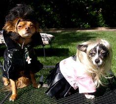Alyssa Milanos dogs get their Halloween on!