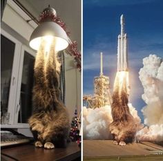 Cat the Rocketship ready to take off wherever Elon Musk counts down new space x mission to the moon.  Cats are Incredible Creatures, they are hilarious and funny, cats get grumpy, mad and angry. But only cat owners know the amazing abilities these feline creatures have.   9 of 10 Fur Friends born in the U.S. never find their forever home.  10% of every product purchased helps them have a second chance. Join us in the effort of providing them a new life in a loving family! #funnymemes… Stupid Funny, Funny Cats, Funny Animals, Funny Jokes, Cute Animals, Funny Food, Stupid Memes, Funny Animal Pictures, Funny Images