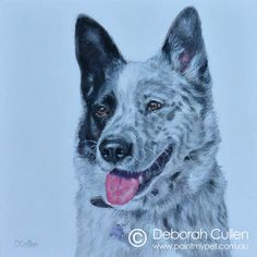 """DOG PORTRAIT Patch – Border Collie x Blue Heeler Acrylic on Canvas, x x Private Commission, Leah (Forest Lake, QLD) Patch - Border Collie x Blue Heeler """"A very sweet (if sometimes cheeky) boy! He's excellent at finding loopholes and Dog Portraits, My Animal, Border Collie, Husky, Patches, Pets, Canvas, Sweet, Blue"""
