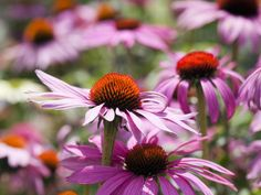 Flowering plants can brighten up your yard during the hot summer days. Using perennial flowers that bloom all summer can help you plan the landscaping of your garden, giving it enough color and charm. Flower Garden Plans, Garden Yard Ideas, Lawn And Garden, Easy Garden, Outdoor Flowers, Outdoor Plants, Garden Plants, Shade Flowers, Shade Plants