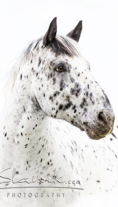 https://www.pinterest.com/iluvcarats/equine-horse-community/  If you would like to join please leave a message on the red add me pin.  the url to the board is right above.