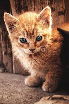 Adorable ! #cats #love #instagood #photooftheday #beautiful #cute #happy #fashion #followme #me #follow