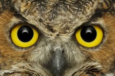 OWLS | Keeping an eye on things - Image of the Week » Bill FrymireBill ...