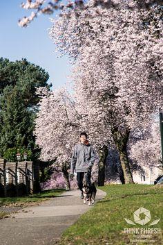 Photography Portfolio, Animal Photography, Shiba Inu, More Photos, Cherry Blossom, Vancouver, Bloom, Facebook, Pets