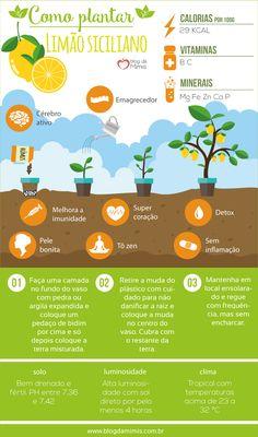 3 Important Things to Remember When Training Your Puppy Eco Garden, Home Vegetable Garden, Garden Tips, Aromatic Herbs, Medicinal Herbs, Orchids Garden, Garden Plants, Comment Planter, My Secret Garden
