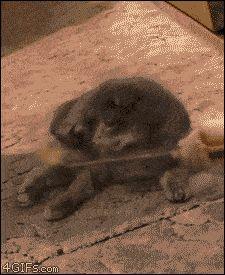 Esse gato cujo mundo acabou de desmoronar.