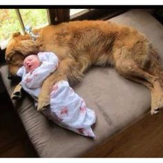 Dog and baby 👑❤  Perfect