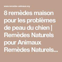 8 remèdes maison pour les problèmes de peau du chien | Remèdes Naturels pour Animaux Remèdes Naturels pour Animaux