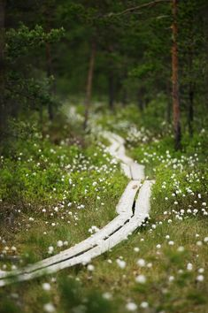 Nordic Thoughts: Trails with duckboards, Finland All Nature, Looks Cool, Pathways, The Great Outdoors, Good Morning, Places To Go, Beautiful Places, Scenery, In This Moment