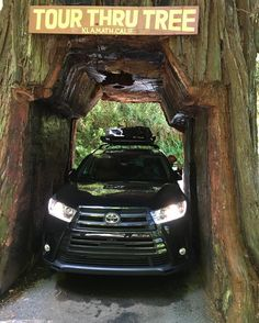 #adventuretime #redwoods