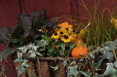 Autumn decorating at Casey's Garden Shop & Florist