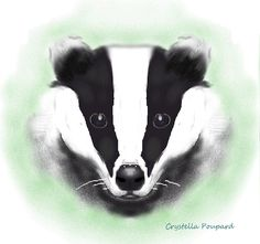 Badger, digital print by Crystella Poupard