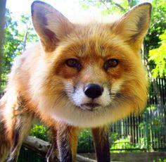 Firefox by ~Misfits13th on deviantART