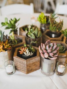 Mimic the essence of botanical gardens with natural DIY potted succulents for whimsical wedding centerpieces.