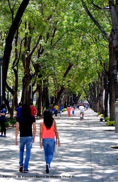 El paseo. / The walk.