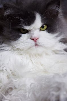 """""""A cat who has taken umbrage is a terrible sight to see."""" --Rosemary Nisbet"""