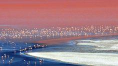 Laguna Colorada (Red Lagoon), Bolivia
