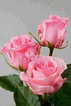 Roses/ WHAT I WOULD DO TO RECIEVE SOME OF THESE TOMORROW....