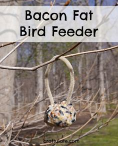 This bacon fat bird feeder is a wonderful way of using up the grease that is leftover from cooking bacon!