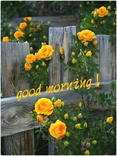 Good Morning Sister, Good Morning Picture, Good Morning Good Night, Morning Pictures, Morning Wish, Good Morning Images, Good Morning Quotes, Gd Morning, Happy Morning