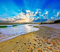 Fantasy Art-birds Flying Into Sunset Over Shell Covered Beach Photograph
