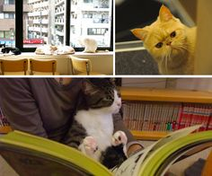 A guide to Tokyo's best cat cafes