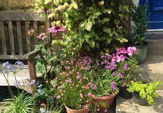 container-gardening-small-garden.jpg 630×438 Pixel