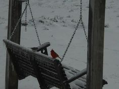 021815.  TN snow storm.