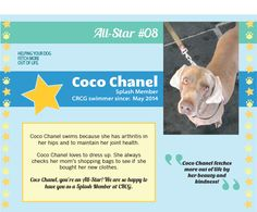 Meet CRCG Club FETCH All Star, Coco Chanel! Coco Chanel fetches more out of life by her beauty and kindness! Coco Chanel loves to dress up. She always checks her mom's shopping bags to see if she bought her new clothes!