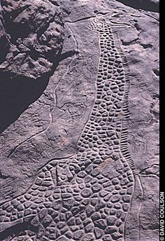 The engraved images of two giraffes, estimated to be some 7000-9000 yrs old, have been found atop a 50-foot-high sandstone outcrop in the Sahara Desert of northeastern Niger. One is more than 20 feet high. They are among the finest examples of African rock art found to date; the larger of the two images may well be the largest-known single prehistoric work of art in the world.