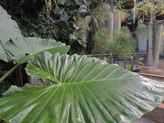 Invernadero Santiago Castroviejo Bolibar. http://www.elhogarnatural.com/JARDINESBOTANICOS/jardines%20botanicos.htm