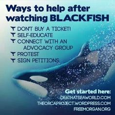Stop Sea World Captiviy | Ways to help the whales /dolphins. Blackfish.Stop Seaworld.