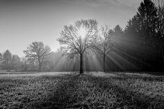 Winter light through a tree