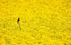 Photo of the Day: Deep in the Yellow Sea