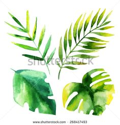 Tropical Leaves Wallpaper Stock Photos, Images, & Pictures | Shutterstock