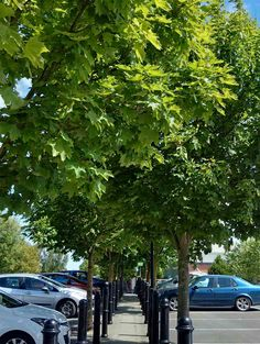SUPERMARKEY PARKIG BAYS TREES - Google Search