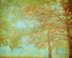 Trees, nature fine art photo -Feels Like a Memory - by Keri Bevan