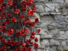 The stunning poppies from Paul Cummins exhibition 'Blood Swept Lands and Seas of Red'