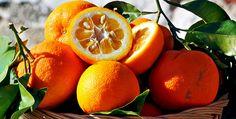 Le arance, da sempre considerate il simbolo della vitamina C e la panacea universale contro i mali invernali, viene messa al banco degli imputati dal dottor Mozzi colpevole di tutta una serie di patologie, a partire proprio dai quei problemi respiratori, come le tossi e le bronchiti, che in teoria le arance dovrebbero aiutarci a risolvere.
