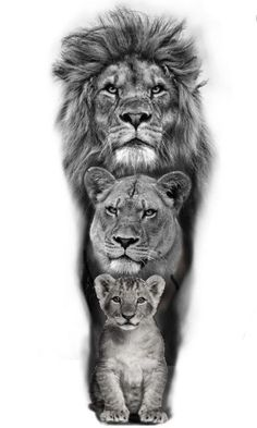 Lion Head Tattoos, Mens Lion Tattoo, King Tattoos, Lion And Lioness Tattoo, Lion Images, Lion Pictures, Animal Pictures, Lion Tattoo Sleeves, Tiger Tattoo Sleeve