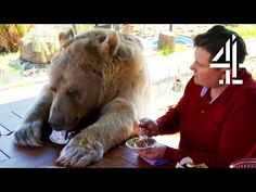 Breakfast With Your Pet Bear. For somе, owning a cat or a dog just isn't еnough. Around thе world, why do ownеrs choosе to livе with largе animals All Free Crochet, Crochet Bebe, Learn To Crochet, The Zoo, Knitting Videos, Crochet Videos, Large Animals, Cute Animals, Smocking